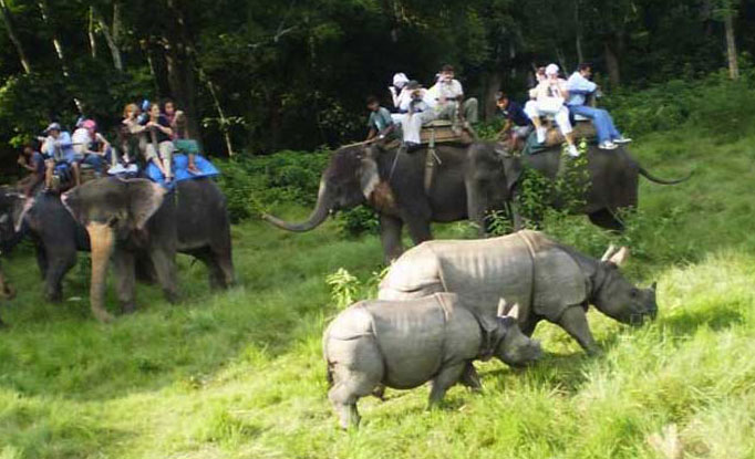 Chitwan Jungle Safari 01 Nights 02 Days